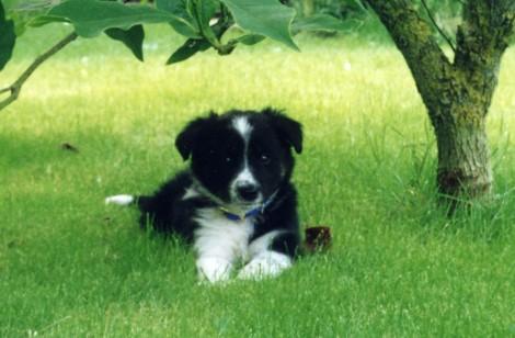 jessie puppy 2